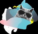 waber_cat