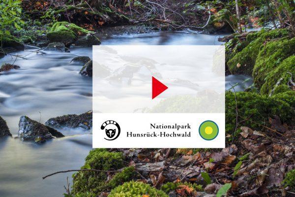 Videokampagne - Nationalpark Hunsrück Hochwald